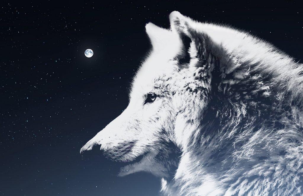 ^^etre connu comme le loup blanc